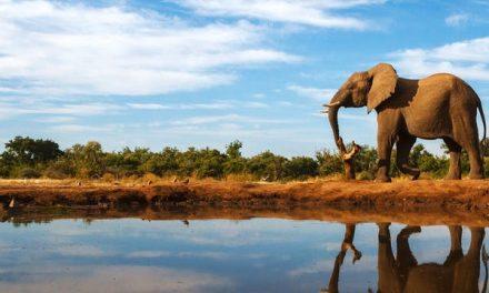 Dagaanbieding – Luxe lodge Zuid-Afrika
