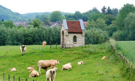 Dagaanbieding – Vakantiepark Zuid-Limburg